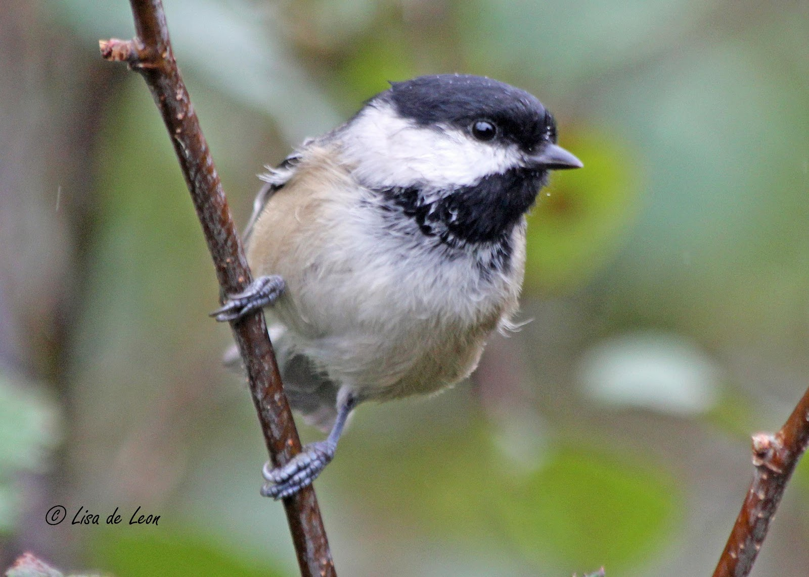 common backyard birds images reverse search