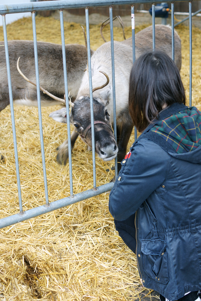Hello Freckles Feeding Reindeer