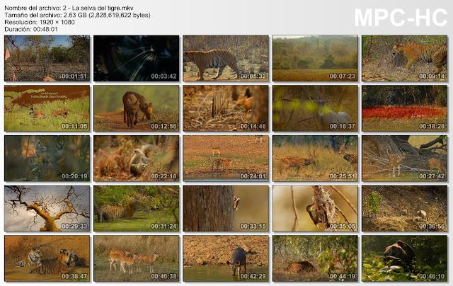 7GB|NATGEO HD|India Salvaje|FullHD 1080p|3-3|MEGA