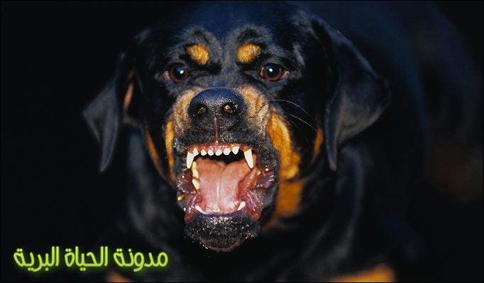 بالصور اسعار الكلاب فى مصر