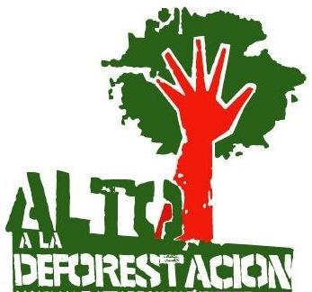 Resultado de imagen para No talar árboles