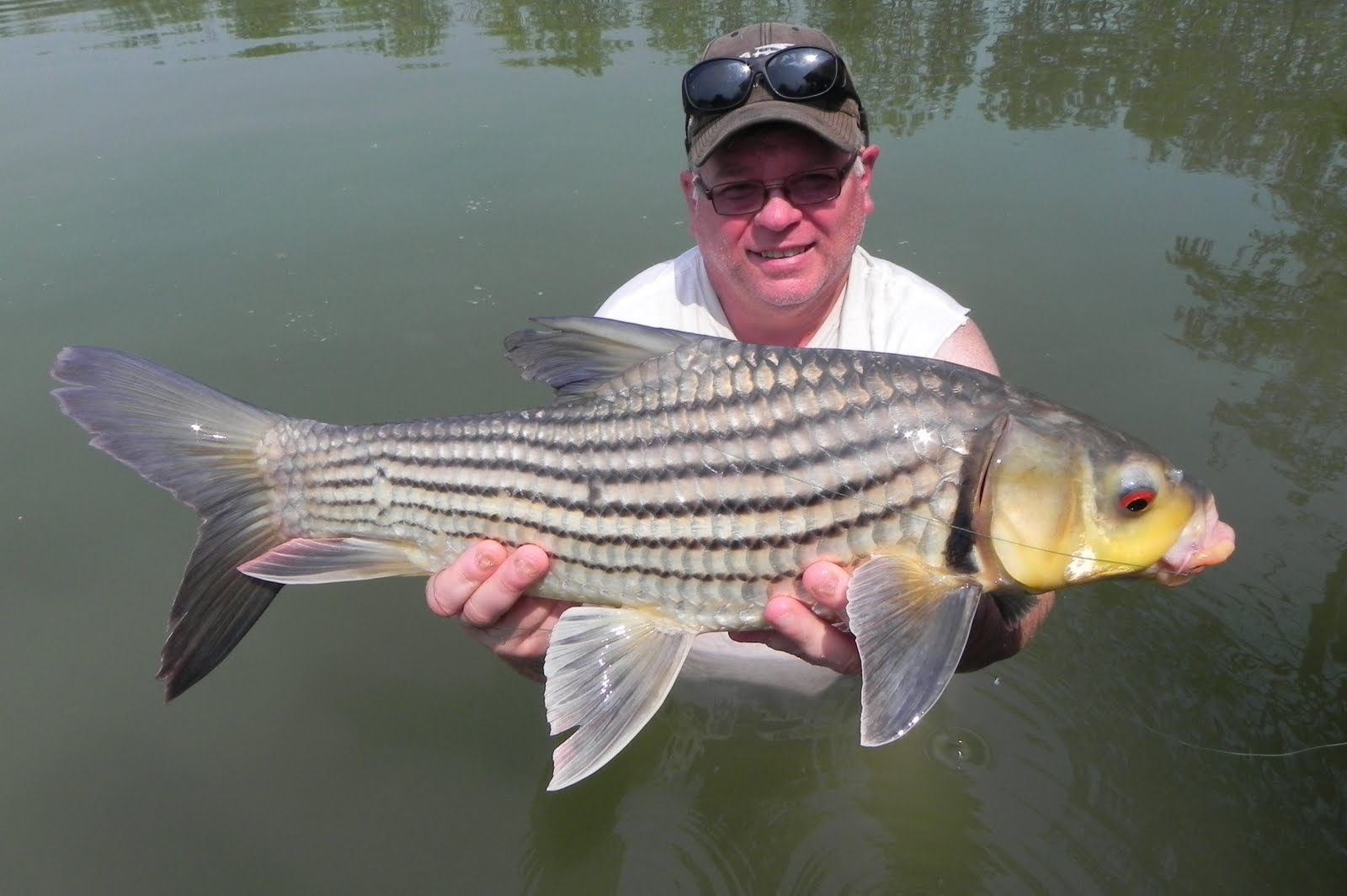 The fishing news world 39 s strongest freshwater fish for Pond fish species
