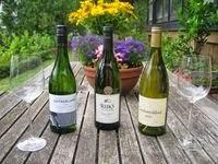 Wein-Deko- Internationaler Weinhandel- 3  Weißweine aus Süd-Afrika