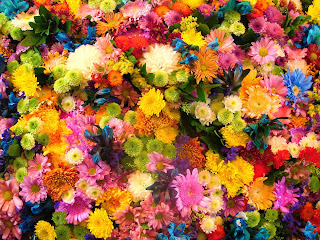 fotos flores gratis