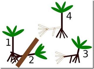 Pohon yang bisa bergerak gemparkan dunia