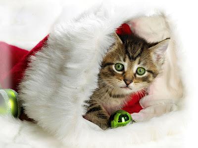 Gatito navideño en imagenes de fin de año y nuevo 2013