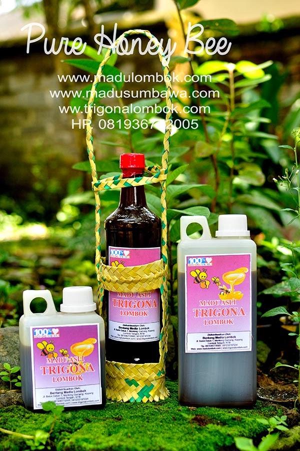 harga-madu-trigona-lombok
