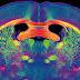A Super Computer Mimics Brain Cells, Reaches 1% Of Capacity