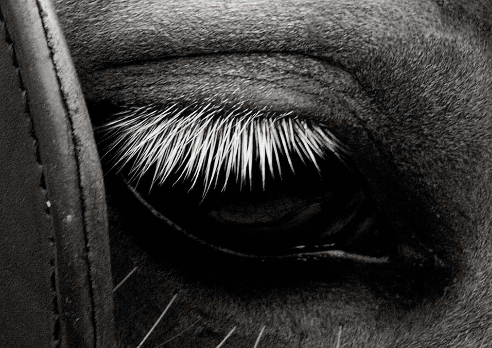 قصة الحصان الوفي