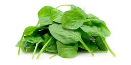 Vegetable : Spinach