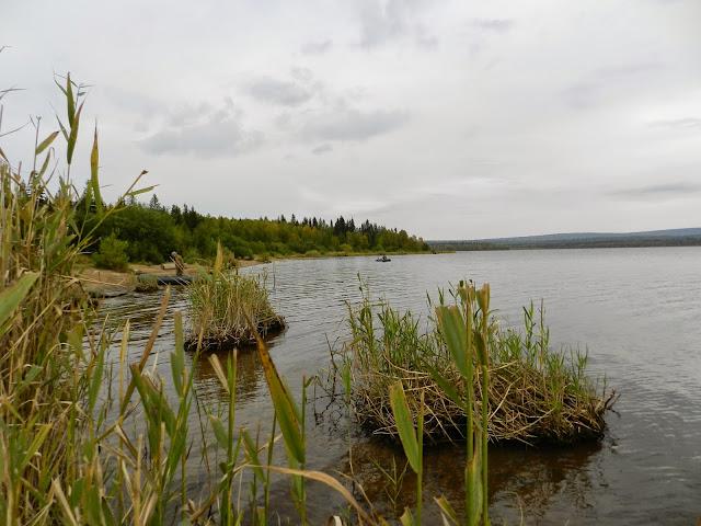 Кочки у берега озера Зюраткуль