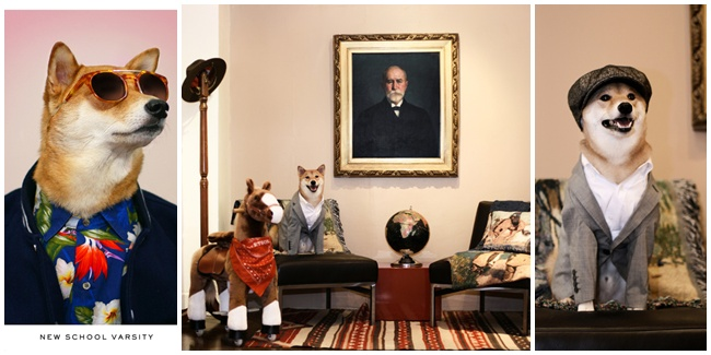Anjing Shiba Saat Menjadi Model Pakaian Pria