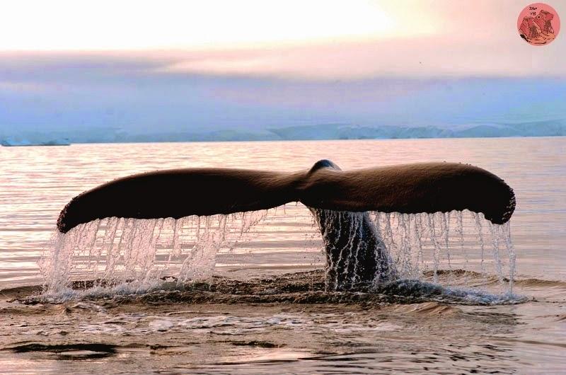 Avistamiento de ballenas en Las Caletas