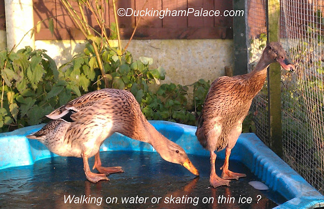 Princess Lily and Elsie walking on water but really skating on thin ice