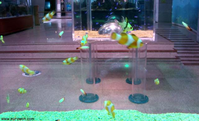 Acuario en el Museo de Ciencia Marítimade Tongyeong