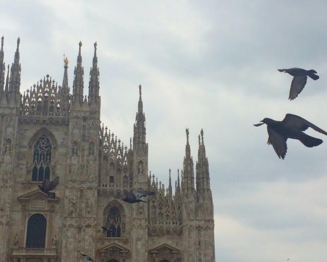 Duomo Cathedral Milan pigeons