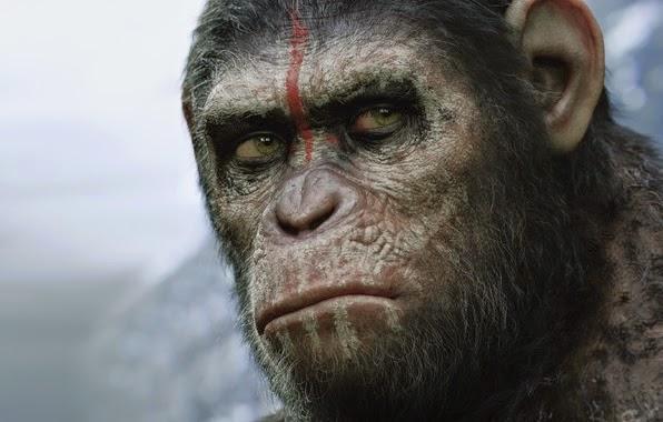 Le scimmie parlano: nuova scoperta scientifica