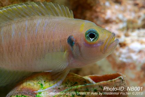 Bildagentur - agenturfischer.com