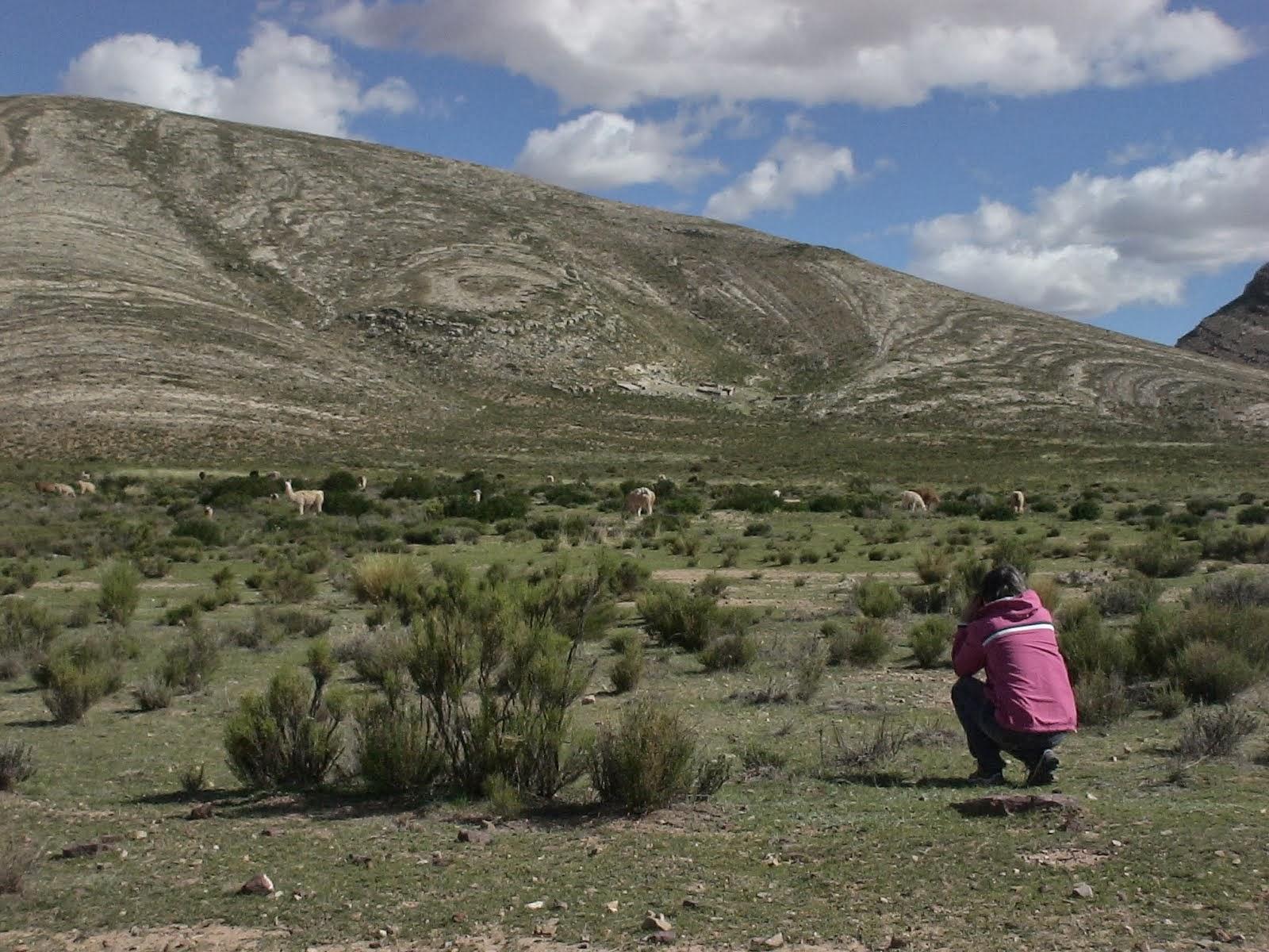 Fotografando Lhamas no Norte da Argentina