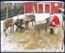 Watch Santa's Official Reindeer Live!