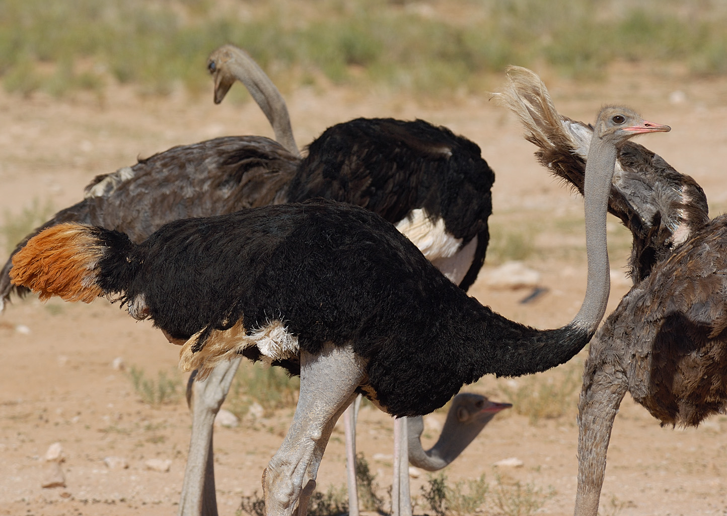 encyclopaedia of babies of beautiful wild animals the baby ostrich