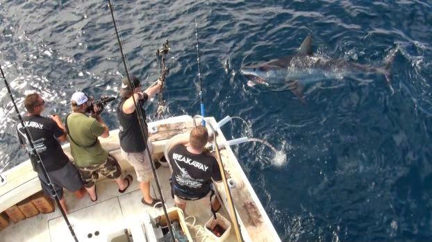 Jeff Thomason photo of world record mako shark caught with bow and arrow off California