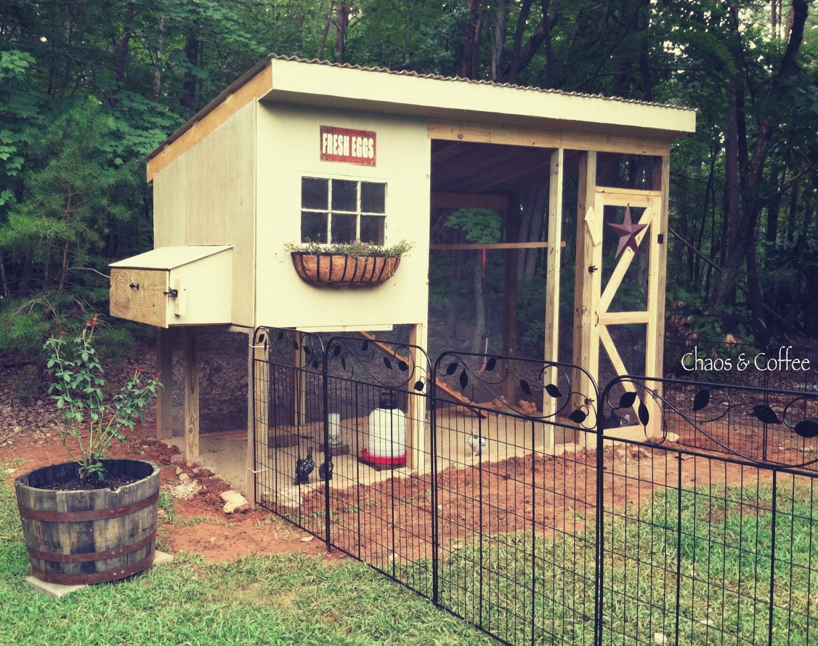 chaos and coffee a birthday a chicken coop u0026 dreams come true