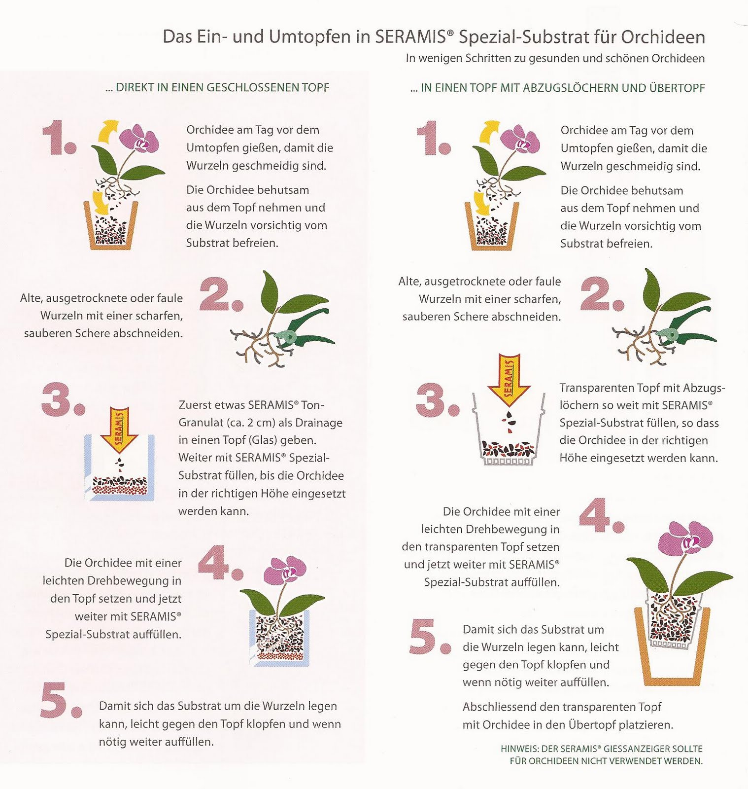 showroom by creative pink orchideen umtopfen mit seramis. Black Bedroom Furniture Sets. Home Design Ideas