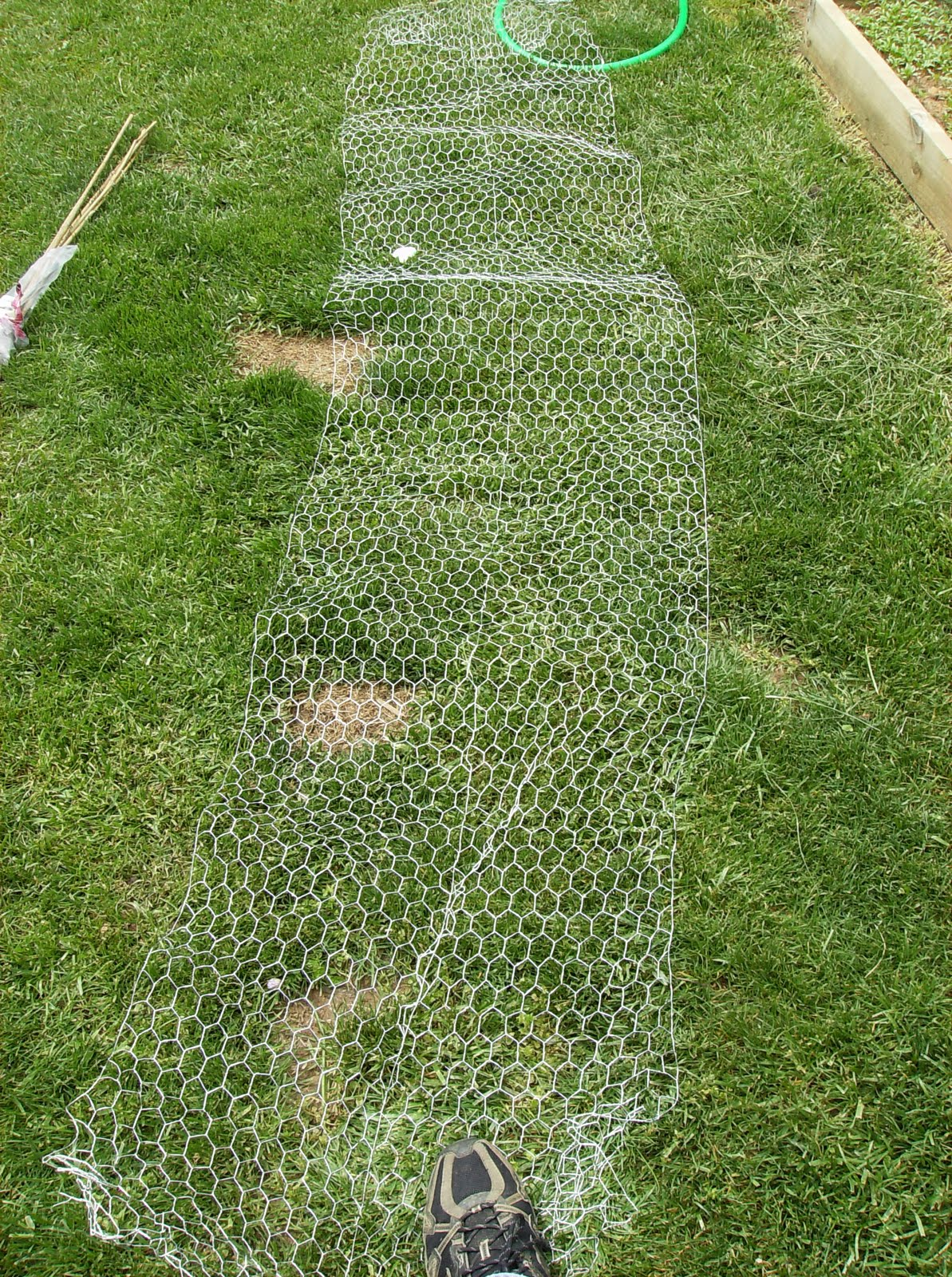 building a low cost vegetable garden trellis in pictures the 10 feet of chicken wire