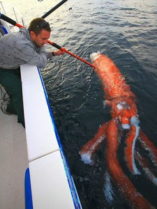 Giant Squid Discovered [Photos & Video]