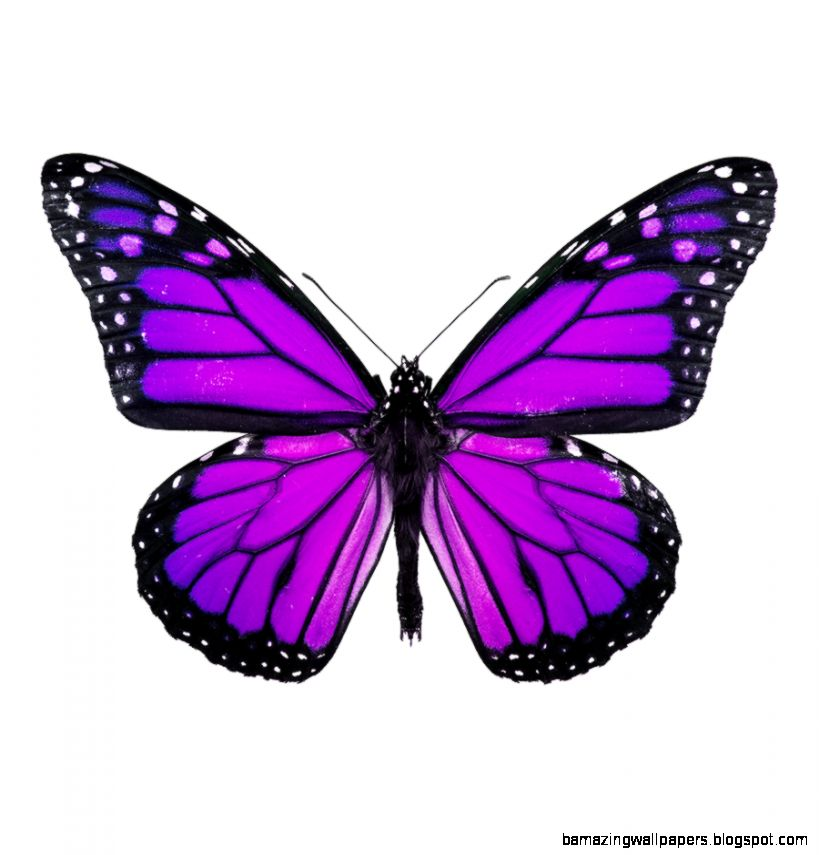 Small Purple Butterfly