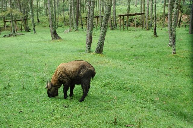 Lingkungan Bhutan