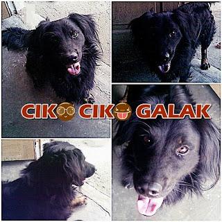 Ciko Jeriko (Foto dari Facebook)