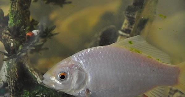 Foire aux questions pourquoi les poissons rouges for Poisson rouge a donner