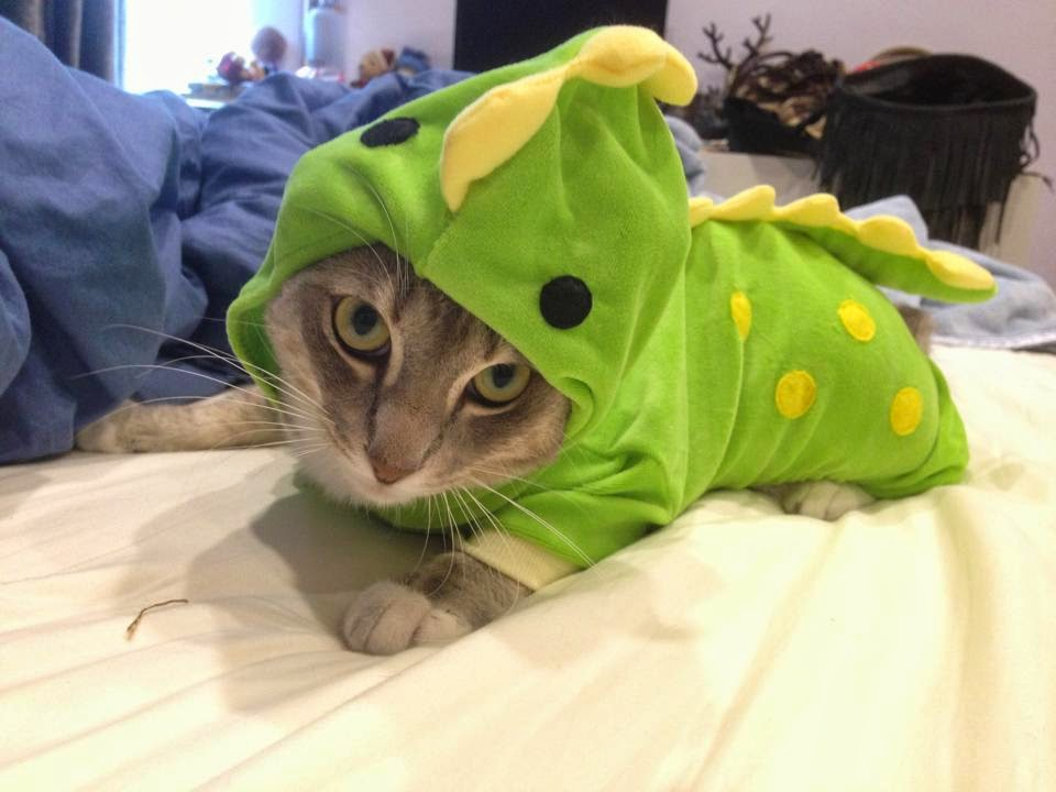 Funny cats - part 94 (40 pics + 10 gifs), cat pictures, cat wears dinosaur costume