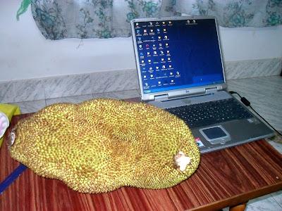 Джекфрут - самой большой фрукт в мире