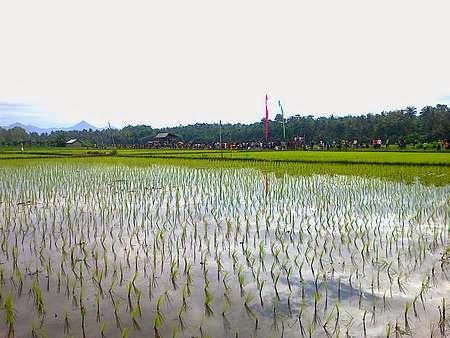 Subak in Bali