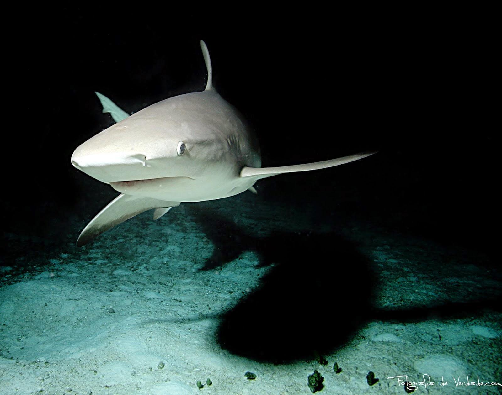 O ataca do Tubarão nas Bahamas