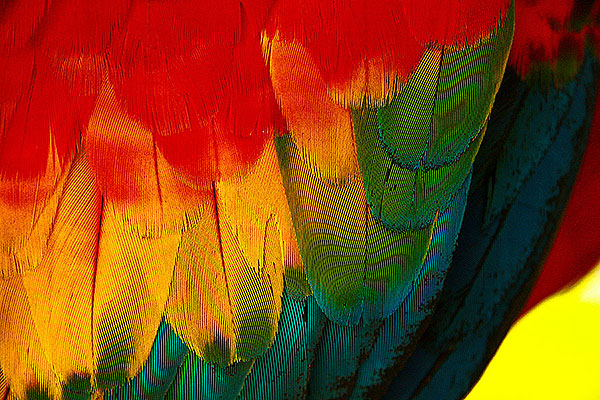 AMAZING AMAZON #1 Feathers / Plumas