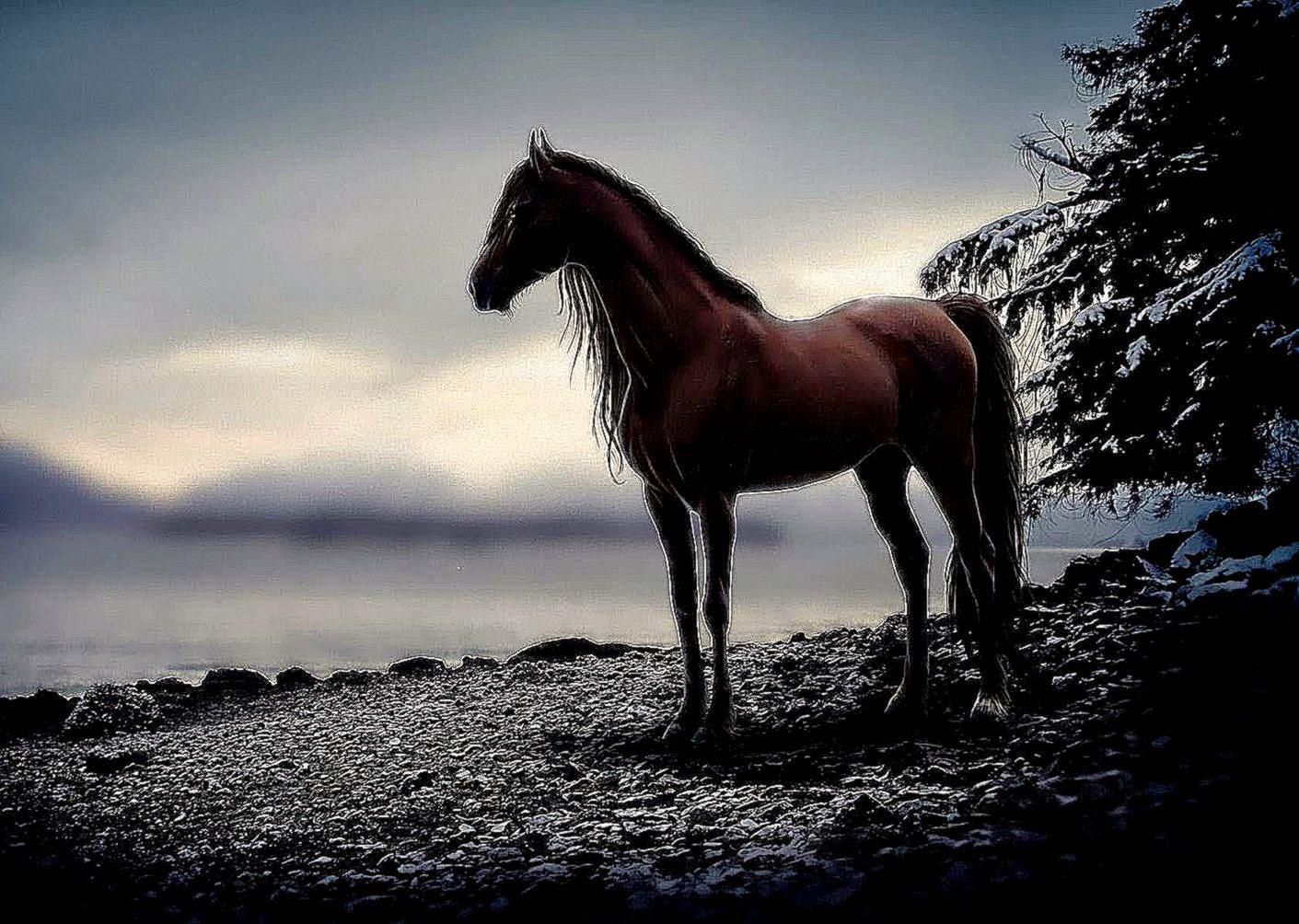 dark horse wallpaper sunset all hd wallpapers