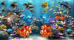 Khasiat Serta Manfaat Dari Memelihara Ikan Hias