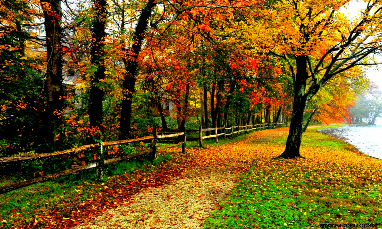 Fall Foliage Backgrounds   WallpaperSafari