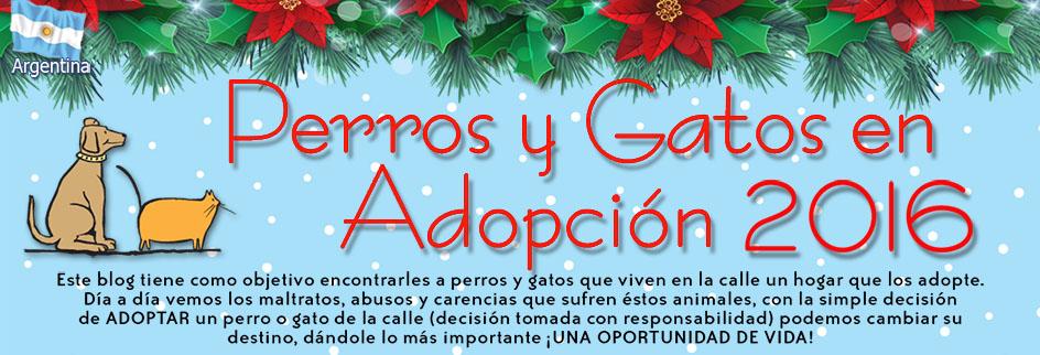Perros y Gatos en adopción 2016
