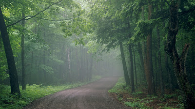 HD_Nature_Wallpaper_beauty_of_green path
