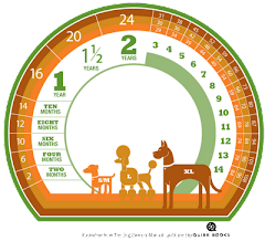 Saiba a idade do seu cão