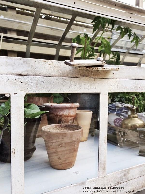 växthus, green house, tomater, gurka, industri, industriellt, industristil, plåt, vitt, växt, växter, grönt, grönsaker,