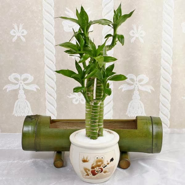 Indoor plants simple and beautiful garden park - Small trees for indoors ...