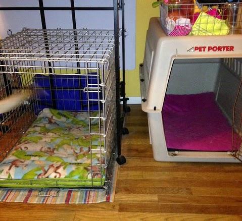 Medium Dog Beds Ebay