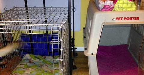 Walmart Pet Beds For Dogs