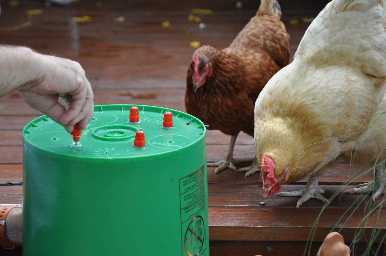 diy chicken waterer community chickens